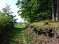 Waldsaum Unterer Berg.jpg