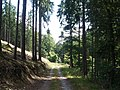 Waldweg bei Haiger - geo.hlipp.de - 39703.jpg