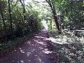 Waldweg bei Hochstadt - geo.hlipp.de - 41739.jpg