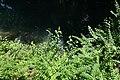 Walk along the Thiou river @ Annecy (34836282493).jpg