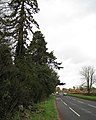 Warwick Road approaching Leek Wootton by Wootton Court pinetum - geograph.org.uk - 1579220.jpg