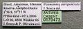 Wasmannia auropunctata casent0179473 label 1.jpg