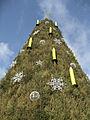 Weihnachtsbaum-Do-2011-779 1.jpg