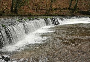 River Plym - The only weir on the River Plym, near the former Cann Quarry Canal