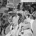 Wereld Dierendag 1964 , het voeren der dieren (buitenland), Bestanddeelnr 916-9724.jpg