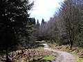West Highland Way, Balmaha Plantation - geograph.org.uk - 148813.jpg