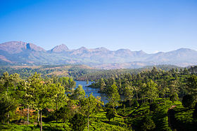 Western Ghats Tea Plantations Kerala India 2014.jpg