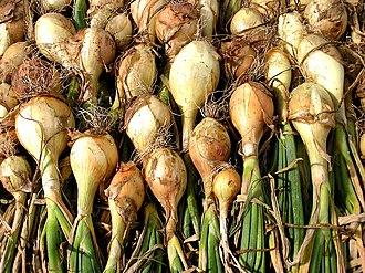 White onion - White onions