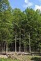 Wien-Hietzing - Naturdenkmal 478 - Urwald am Johannserkogel II.jpg