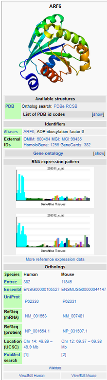 Sample infobox for the ARF6 protein