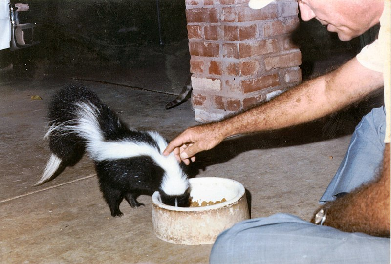 Skunks And Cat Food