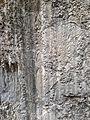 Windley Key fossil 1.JPG
