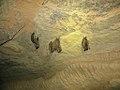 Windy Slope Cave 2011 Bat Count - 01.jpg