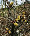 Wiosna w Lusowie.JPG