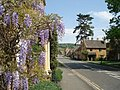 Wisteria at Broadway - geograph.org.uk - 467523.jpg