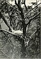 With nature and a camera; being the adventures and observations of a field naturalist and an animal photographer (1898) (14593380717).jpg