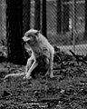 Wolves 2 (7177922988).jpg