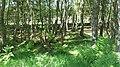 Woodland by Portmore Loch - geograph.org.uk - 1335954.jpg