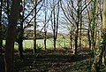 Woodland by the A262 - geograph.org.uk - 1802651.jpg