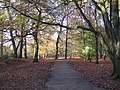 Woodland path at Alderley Edge.jpg