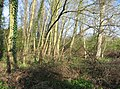 Woodlands in the spring by the Cam - geograph.org.uk - 768485.jpg