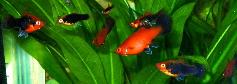 So you have considered the clearly tinted Guppy at your water facility and ...