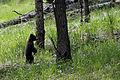 Yellowstone-0172.jpg