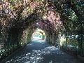 Yerevan Botanical Garden 1n (19).jpg