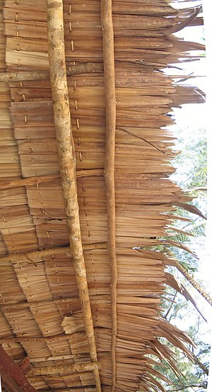 Attap dwelling - Detail of atap roof thatching.