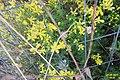Zakynthos flora (Xigia) (34298844723).jpg