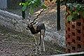 Zoo of Ahmedabad, India (4051878975).jpg