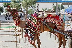Pushkar Fair - A Camel cart at the Pushkar Fair