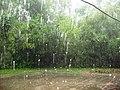Đà Nẵng năm 2008 mưa ngoài trời.jpg