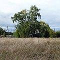 Афимовская, Верхнетоемский район, Архангельская область - panoramio.jpg
