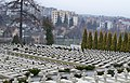 Військовий меморіал — Личаківське військове кладовище..JPG