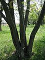 Дендрологічний парк 193.jpg