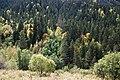Карачаево-Черкесия, Западный Кавказ, Софийская долина, хвойный лес на склонах, Karachay-Cherkessia, Caucasus.jpg