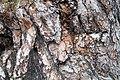 Крым, Новый Свет, кора дерева.jpg