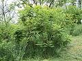 Парк шума Гази Баба во мај (149).JPG