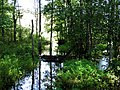 Речка upīte - panoramio - Aleksandrs Timofejev….jpg