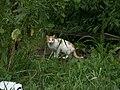 Россия, Вологда, Заречье, ул.Комсомольская,11, кошка, 16-59 11.08.2006 - panoramio.jpg