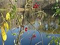 Тарелочкин пруд 47.jpg