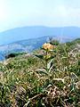 Тырлыч - panoramio.jpg