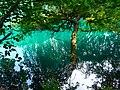 Фрагмент Нижнего голубого озера. Кабардино-Балкария.jpg