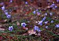 Цветы в Слобожанском парке.jpg