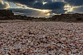 שקיעה בחוף דור הבונים.jpg