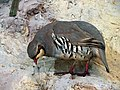 حیوانات تاکسی درمی شده - موزه تاریخ طبیعی شهر قم 17.jpg