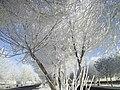 خیابان دانشگاه محقق اردبیلی در یک صبح زمستانی.JPG