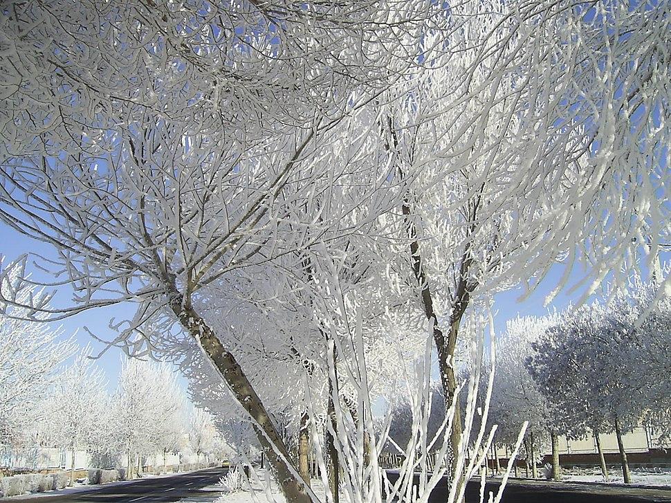 خیابان دانشگاه محقق اردبیلی در یک صبح زمستانی
