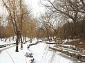 冬柳 - Willows in Winter - 2012.12 - panoramio.jpg
